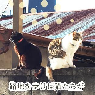 路地を歩けば猫が。町屋の人たちに可愛がられています。